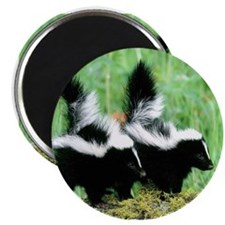 Two Skunks Magnet