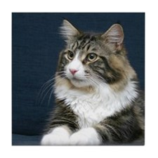 Maine Coon Cat Tile