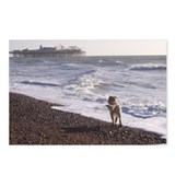 Dog on Brighton Beach Postcards (Package of 8)