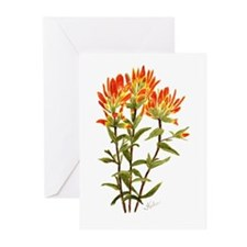 Scarlet Paintbrush Greeting Cards (Pk of 10)