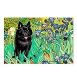 Irises / Schipperke #2 Postcards (Package of 8)
