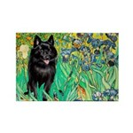 Irises / Schipperke #2 Rectangle Magnet (10 pack)