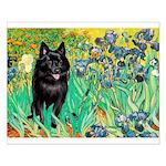 Irises / Schipperke #2 Small Poster