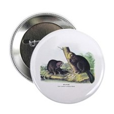 "Audubon Beaver Animal 2.25"" Button (10 pack)"