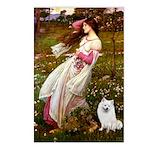 Windflowers / Eskimo Spitz #1 Postcards (Package o