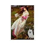 Windflowers / Eskimo Spitz #1 Rectangle Magnet (10