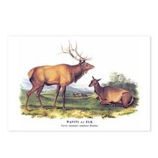 Audubon Elk Animal Postcards (Package of 8)