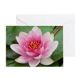 Water Lily Greeting Card flower gift
