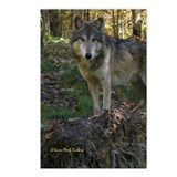 Wolf Posing Postcards (Package of 8)