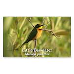 Little Bee-eater Rectangle Sticker