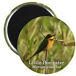 Little Bee-eater Magnet