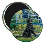 Flat Coated Retriever 2 2.25
