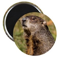 "Groundhog 2.25"" Magnet (100 pack)"