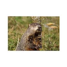 Groundhog Rectangle Magnet
