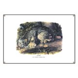 Audubon Lynx Wildcat Animal Banner