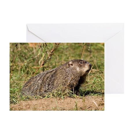 Groundhog Greeting Cards (Pk of 10)