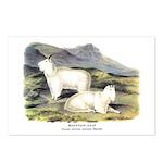 Audubon Mountain Goat Animal Postcards (Package of