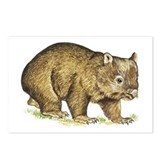 wombat Postcards (Package of 8)