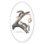 Audubon Red Squirrel Oval Sticker (10 pk)