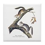 Audubon Red Squirrel Tile Coaster
