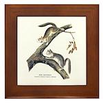 Audubon Red Squirrel Framed Tile