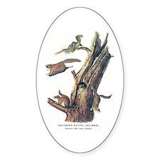 Audubon Flying Squirrel Oval Decal