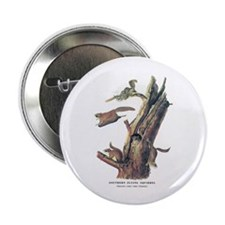 "Audubon Flying Squirrel 2.25"" Button (10 pack)"