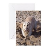 Golden Retriever Digging Greeting Cards (Pk of 10)