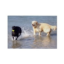 Dogs Playing in Sea Rectangle Magnet (10 pack)