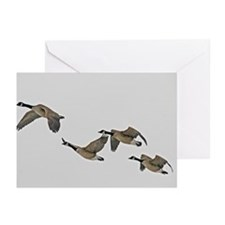 Canadian Geese In Flight Greeting Cards (Pk of 10)