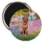 Garden / R Ridgeback Magnet