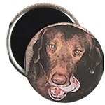 TASTY Chocolate Lab dog gift Magnet