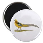 Yellow Golden Pheasant Magnet