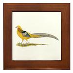Yellow Golden Pheasant Framed Tile