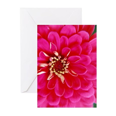 Zinnia - Greeting Cards (Pk of 20)