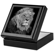 African Lion Keepsake Box