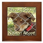 Adopt A Dog! Framed Tile