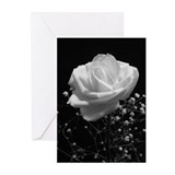 Sympathy Greeting Cards (Blank Pk of 20)