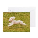 Cute Lure coursing Greeting Cards (Pk of 10)