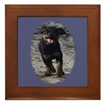 Romping Rottweiler Puppy Framed Tile