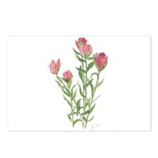 Splitleaf Paintbrush Postcards (Package of 8)