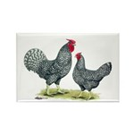 Dominique Chickens Rectangle Magnet (100 pack)
