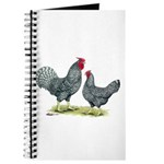 Dominique Chickens Journal