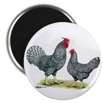 "Dominique Chickens 2.25"" Magnet (100 pack)"