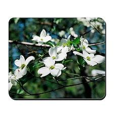 Dogwood Blossoms - Mousepad