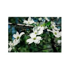 Dogwood Blossoms - Rectangle Magnet