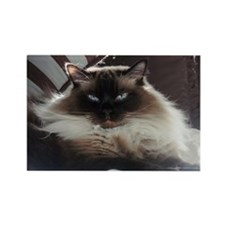 Ragdoll Kitty Rectangle Magnet