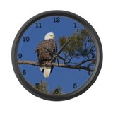 Mature Bald Eagle Large Wall Clock