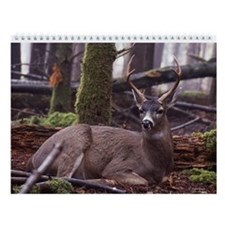 Blacktail Deer Wall Calendar