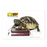 Tortoise Postcards (Package of 8)